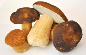 Mushrooms with original Traditional Balsamic Vinegar