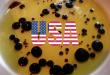 Fake balsamic vinegar in the USA