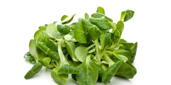 Songino salad